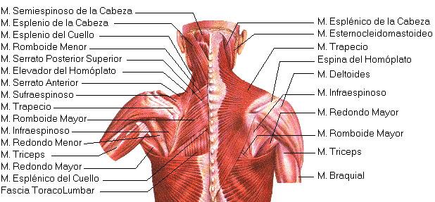 El tratamiento de la columna vertebral en samare las direcciones