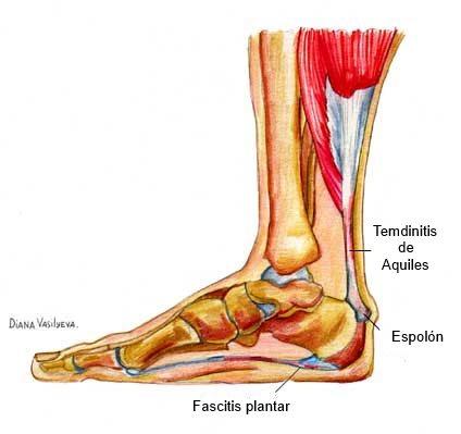 esquema del pie